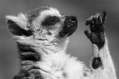 C'est également un zoo éthique grâce à sa participation active dans la conservation et la protection des espèces menacées, comma par exemple le lémur catta.