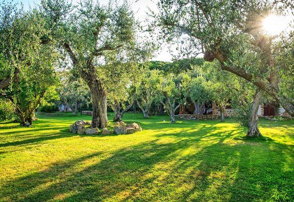 Maisons à louer à Capalbio. Locations vacances à Capalbio ...